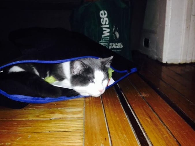 Pince in tote