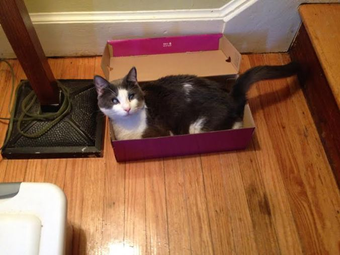Q in box