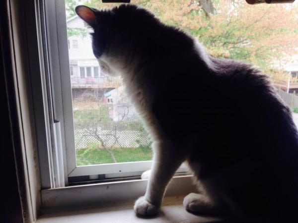 Quincy in window