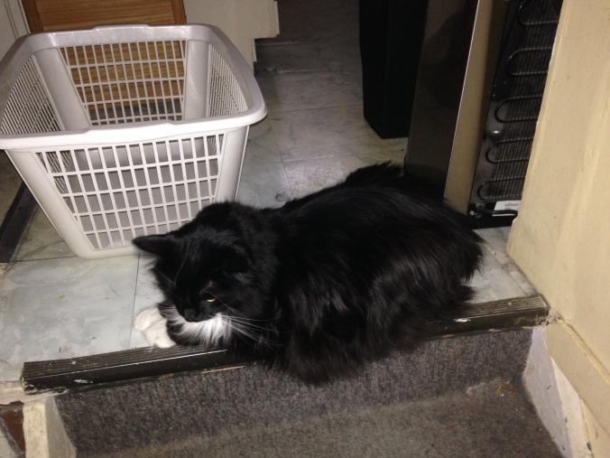 Sylvester depressed