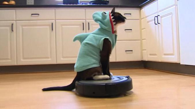 shark cat roomba