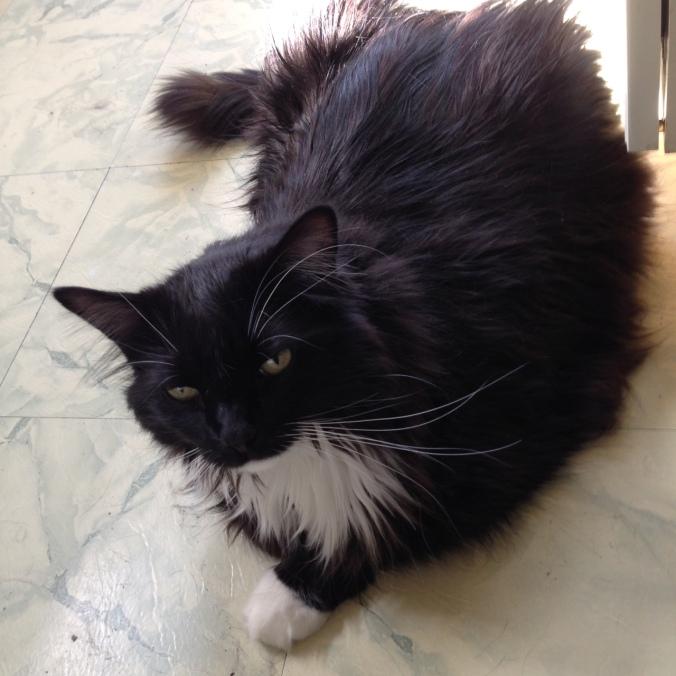 Sylvester in kitchen